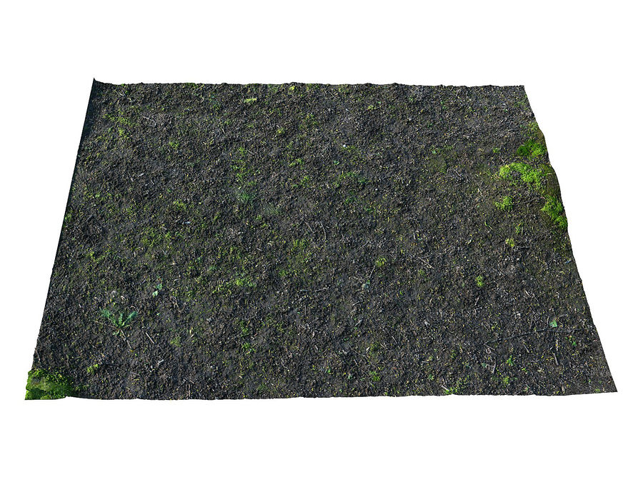 Forest ground 16K Ultra HD royalty-free 3d model - Preview no. 2