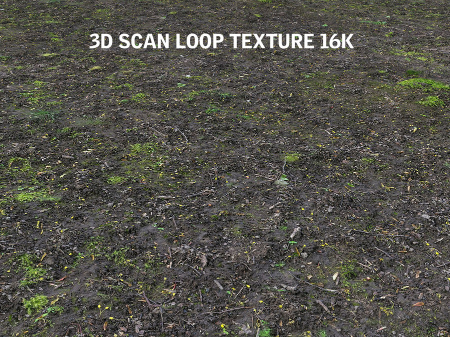 Forest ground 16K Ultra HD royalty-free 3d model - Preview no. 4
