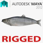 Arenque Pescado Aparejado para Maya modelo 3d