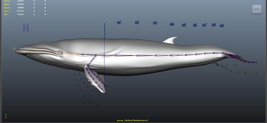 Blue_Whale_Rigged royalty-free 3d model - Preview no. 7