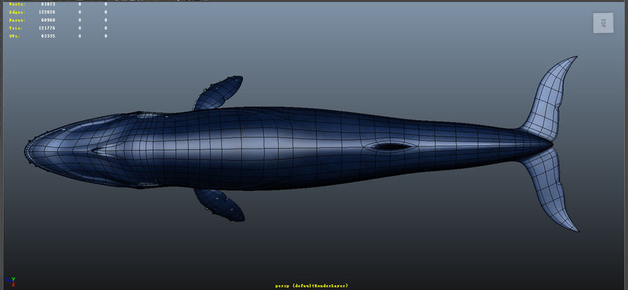Blue_Whale_Rigged royalty-free 3d model - Preview no. 6