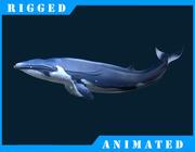 シロナガスクジラ 3d model