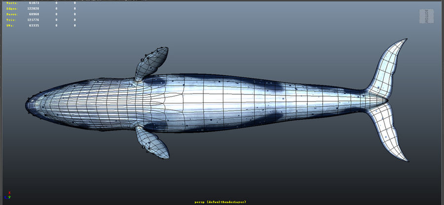 Blue_Whale_Rigged royalty-free 3d model - Preview no. 9