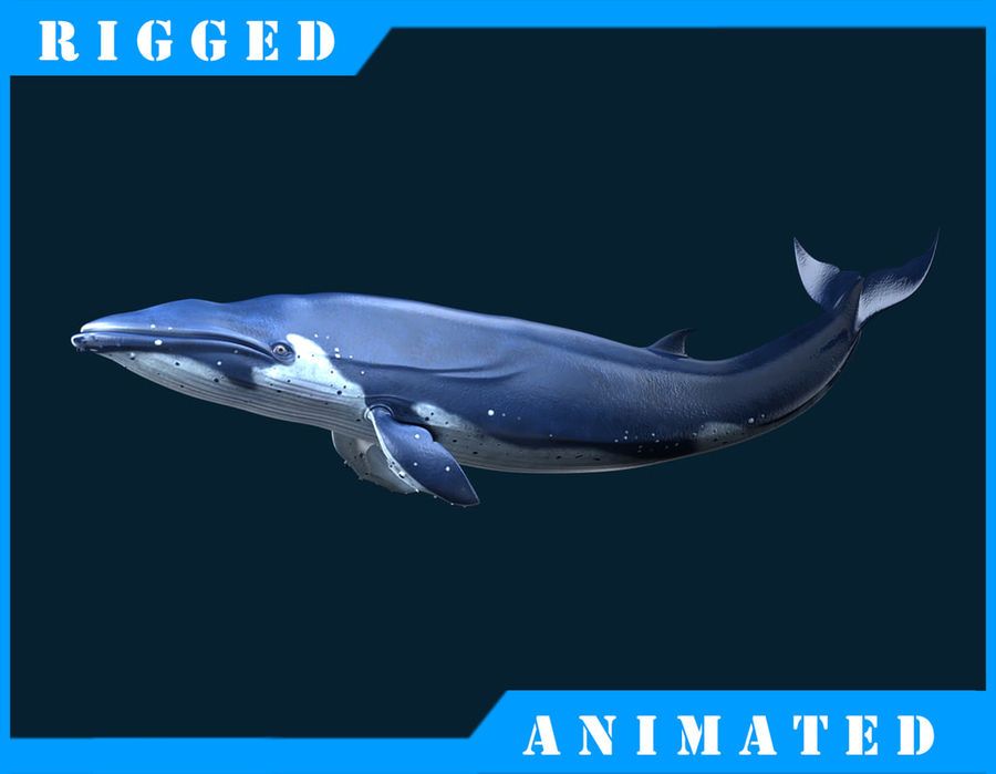 Blue_Whale_Rigged royalty-free 3d model - Preview no. 1