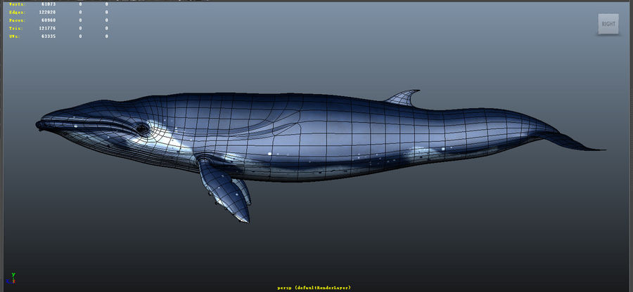 Blue_Whale_Rigged royalty-free 3d model - Preview no. 5