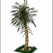 Oasis Palm Tree 3d model