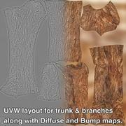砂漠の植物 3d model