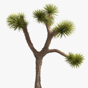 Çöl bitkisi 3d model