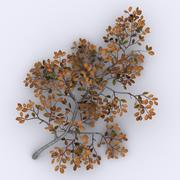 Arctic Willow 3d model