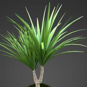 plante d'accueil Yucca 3d model
