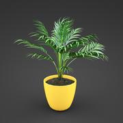 plante d'accueil Areca 3d model