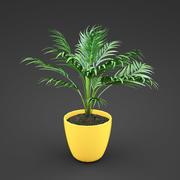 home plant Areca 3d model