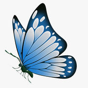 Vlinder lichtblauw 3d model