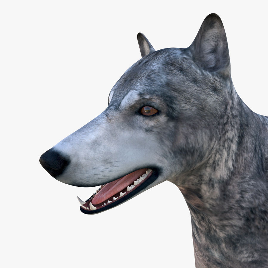 Wolf royalty-free 3d model - Preview no. 13