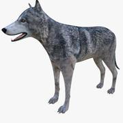 狼 3d model