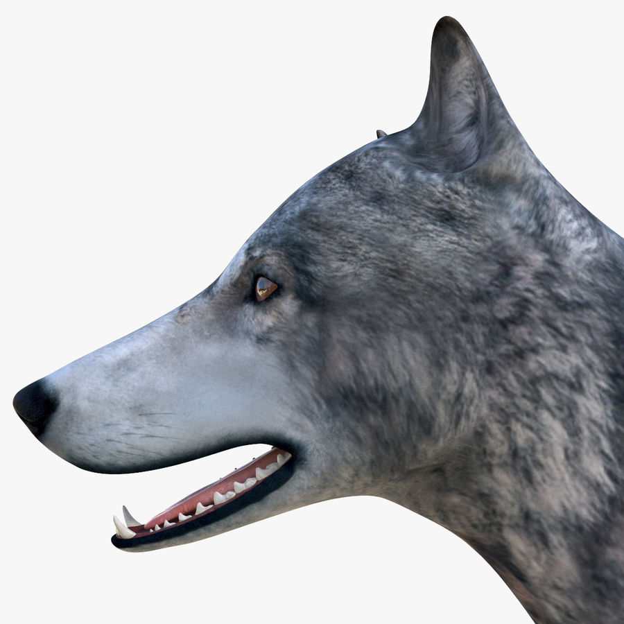 Wolf royalty-free 3d model - Preview no. 14