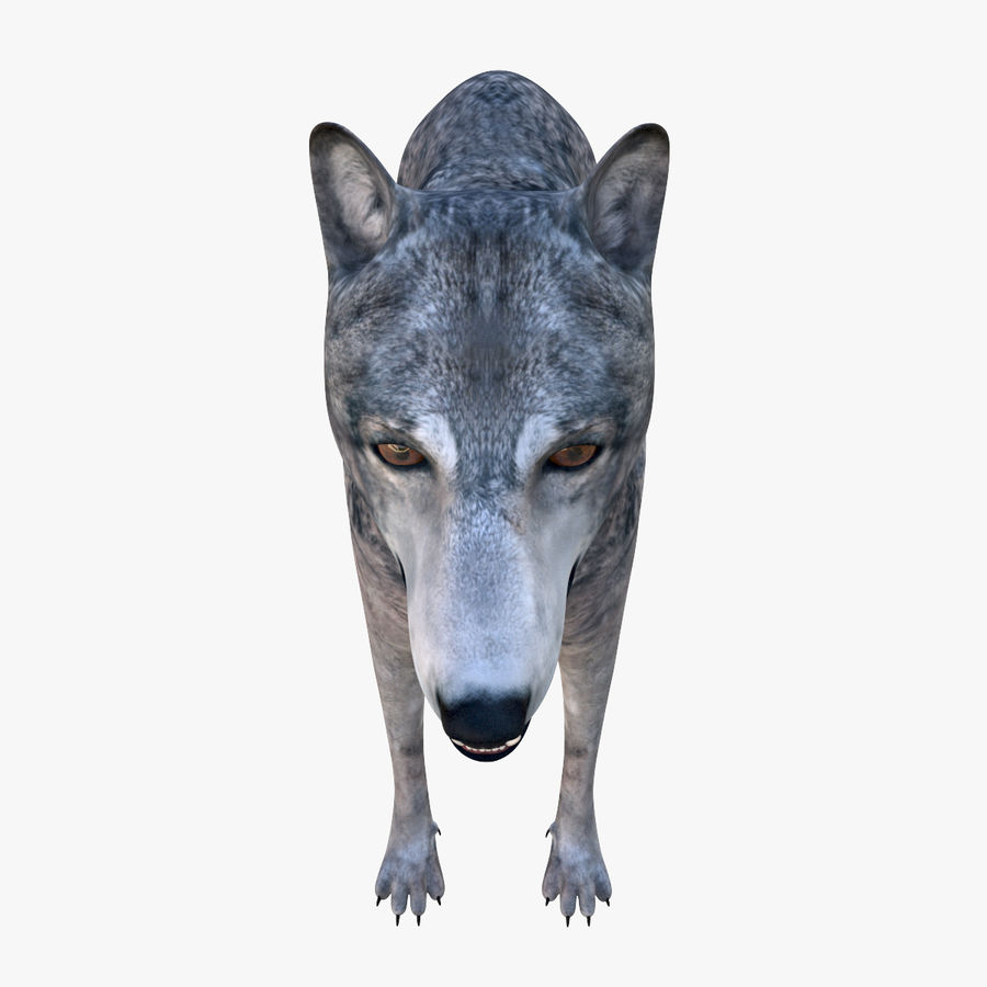 Wolf royalty-free 3d model - Preview no. 12