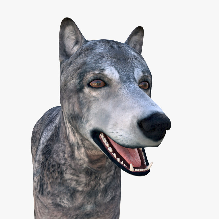 Wolf royalty-free 3d model - Preview no. 11