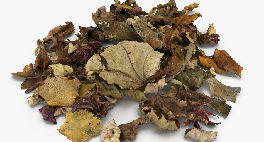 Leaf Leaves 02 royalty-free 3d model - Preview no. 8