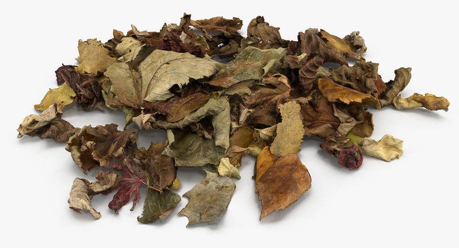 Leaf Leaves 02 royalty-free 3d model - Preview no. 9