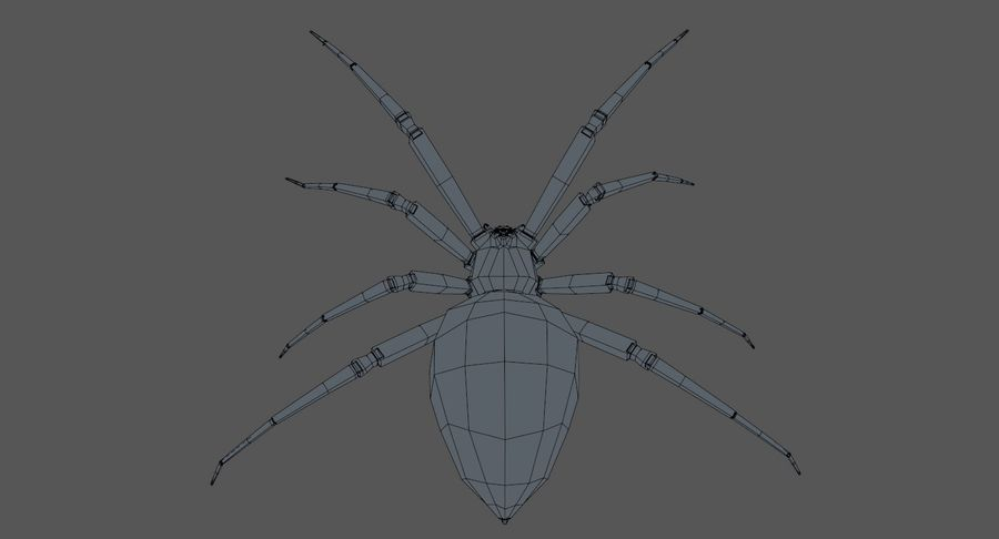 Araña Viuda Negra Realista royalty-free modelo 3d - Preview no. 13