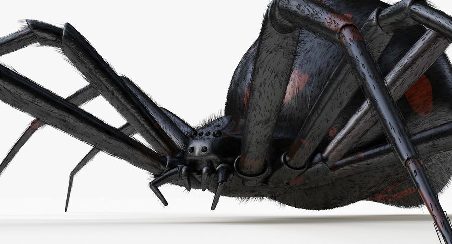 Araña Viuda Negra Realista royalty-free modelo 3d - Preview no. 7