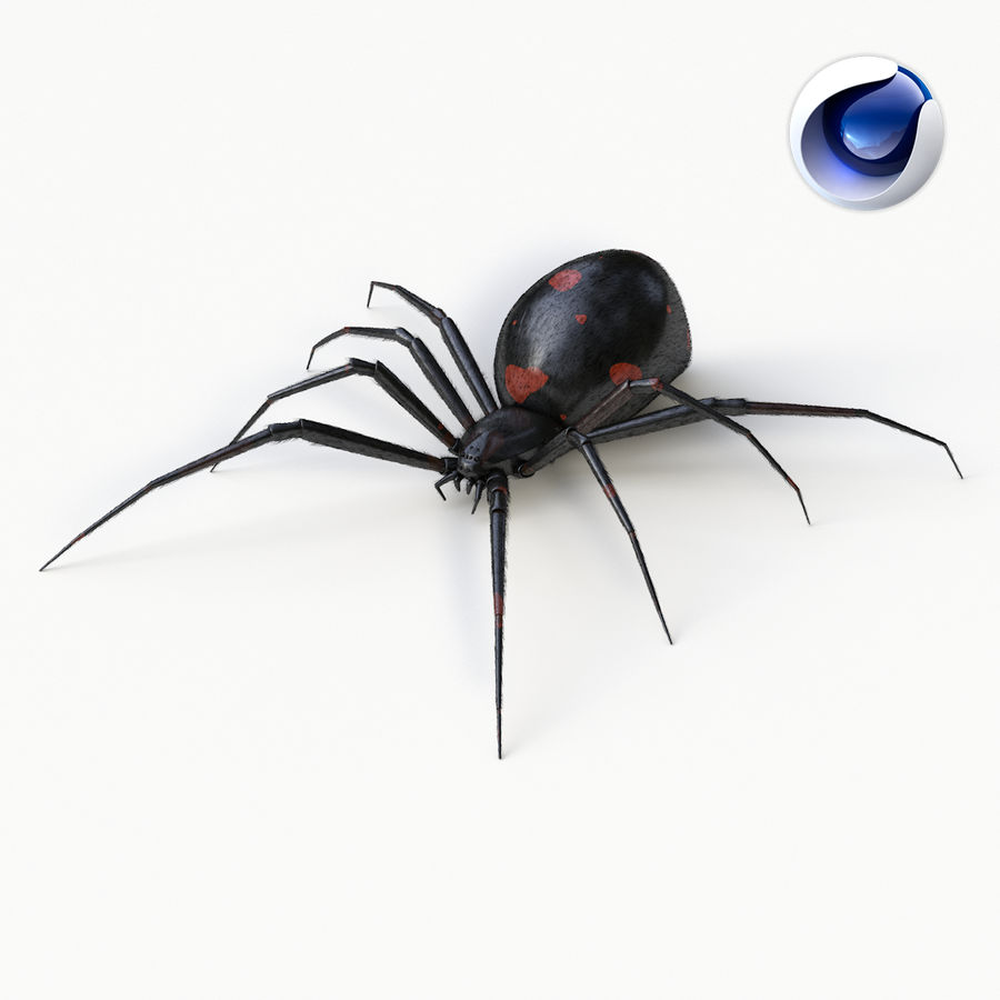 Araña Viuda Negra Realista royalty-free modelo 3d - Preview no. 1