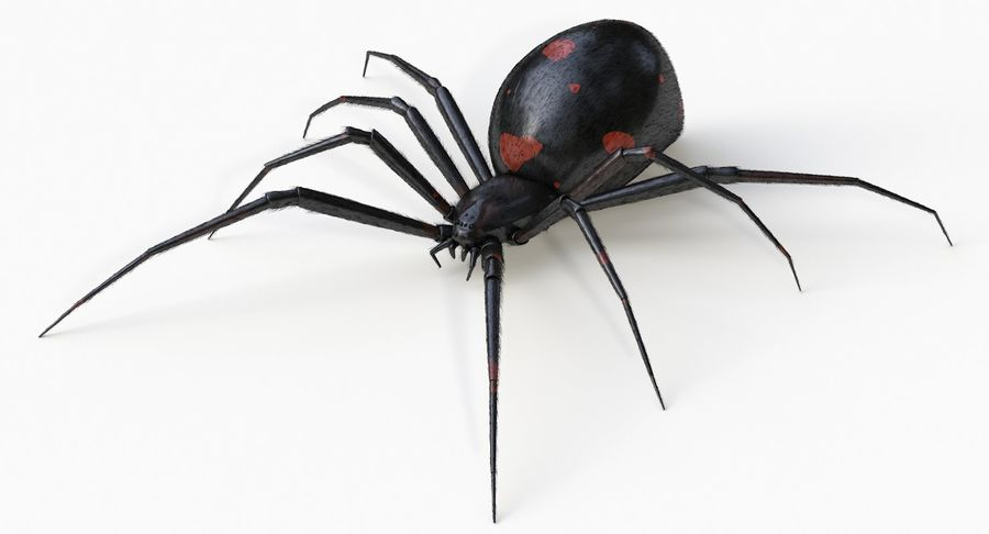 Araña Viuda Negra Realista royalty-free modelo 3d - Preview no. 2