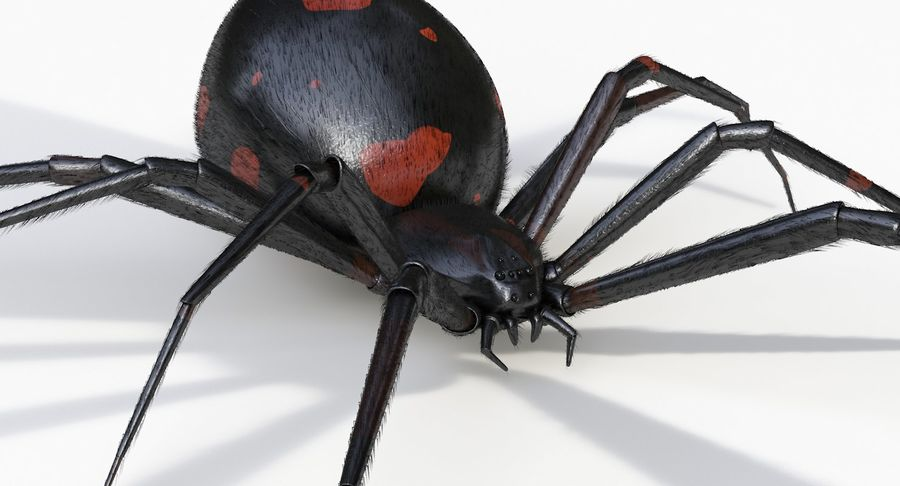 Araña Viuda Negra Realista royalty-free modelo 3d - Preview no. 8