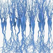 Neuroni piramidali 3d model