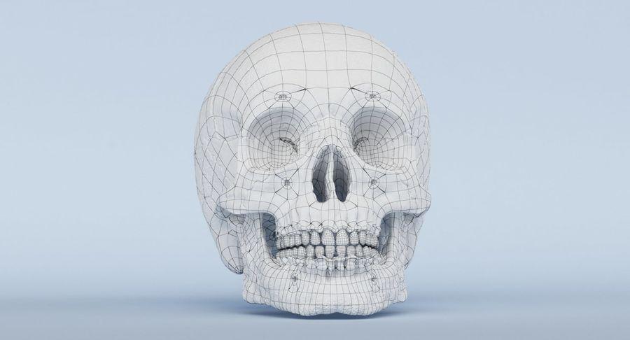 Anatomie du crâne royalty-free 3d model - Preview no. 37