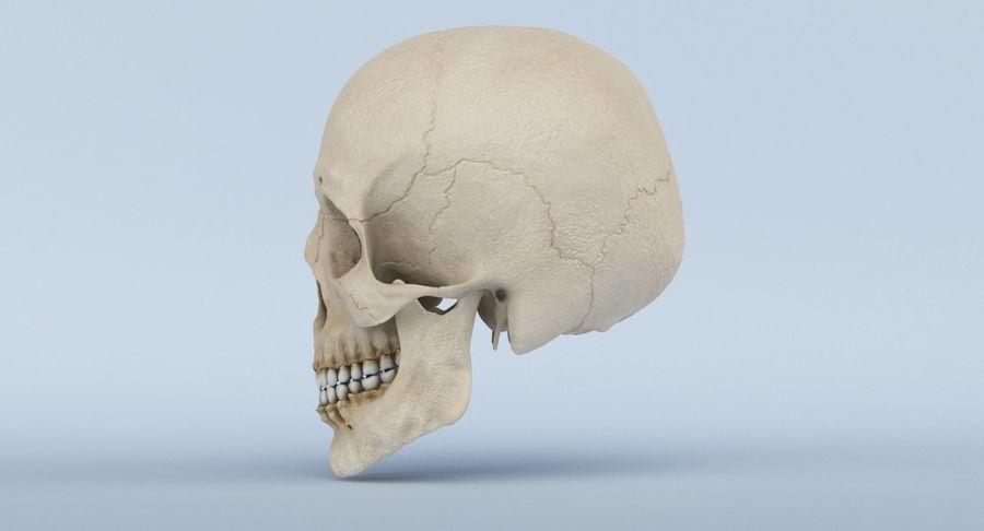 Anatomie du crâne royalty-free 3d model - Preview no. 11