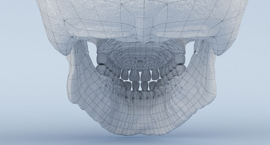 Skull Anatomy royalty-free 3d model - Preview no. 35