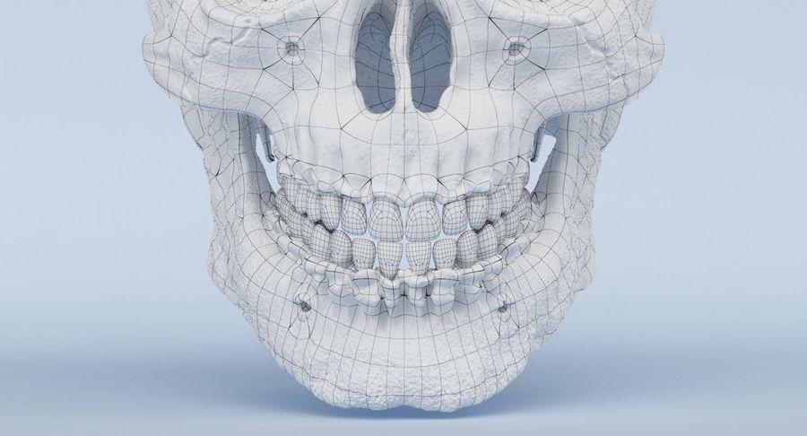 Anatomie du crâne royalty-free 3d model - Preview no. 31