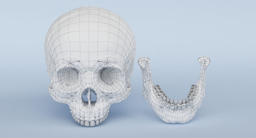 Skull Anatomy royalty-free 3d model - Preview no. 28