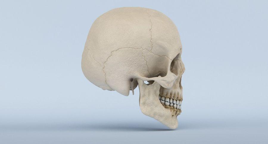 Anatomie du crâne royalty-free 3d model - Preview no. 5