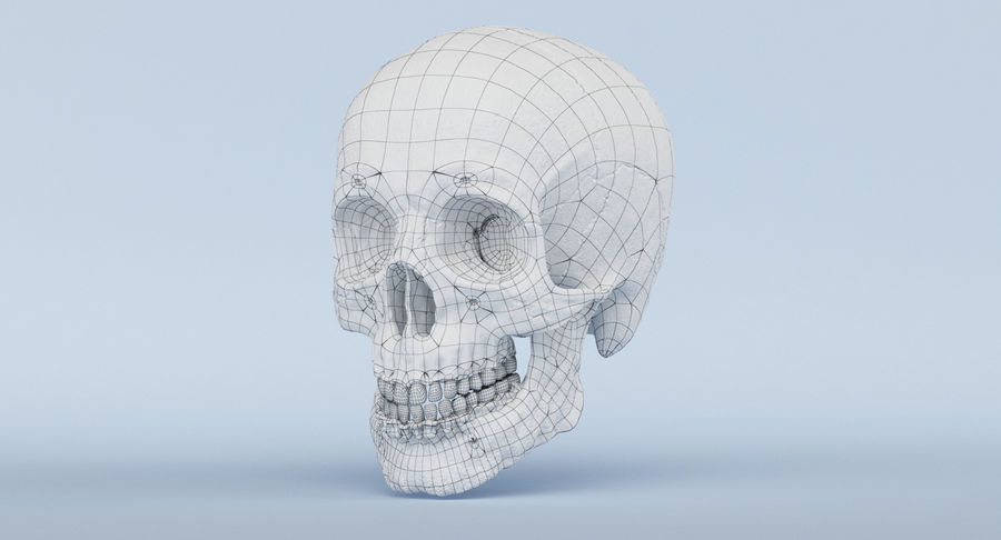 Skull Anatomy royalty-free 3d model - Preview no. 49