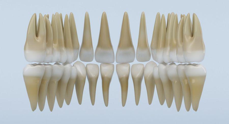 Anatomie du crâne royalty-free 3d model - Preview no. 21