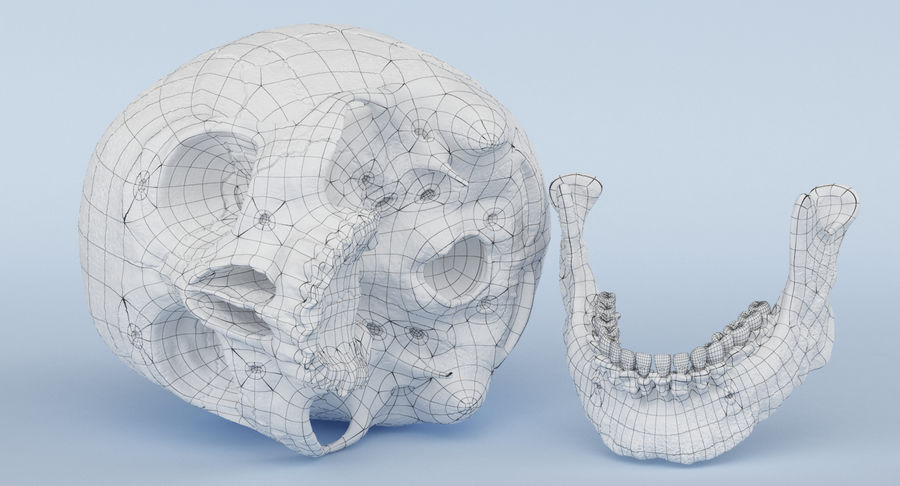 Skull Anatomy royalty-free 3d model - Preview no. 36