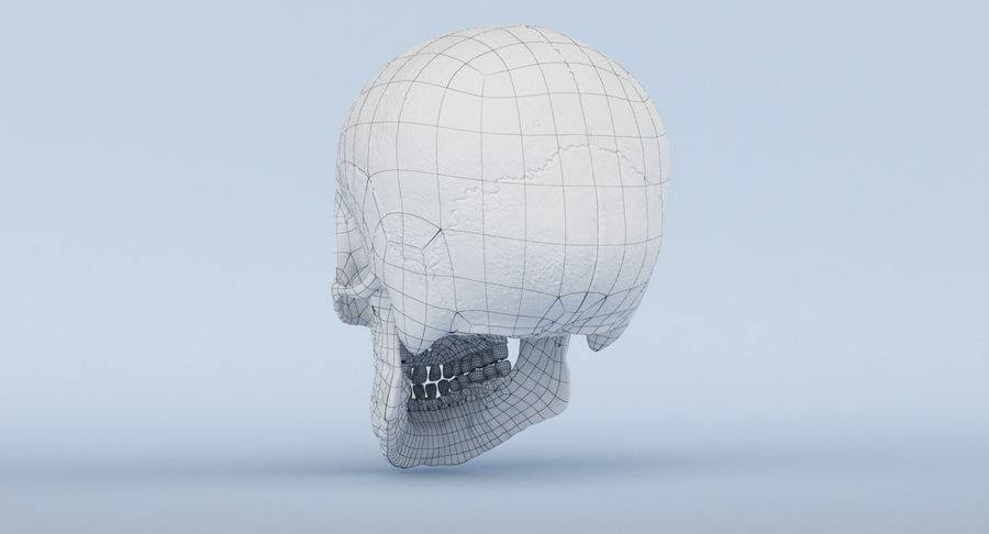 Skull Anatomy royalty-free 3d model - Preview no. 45