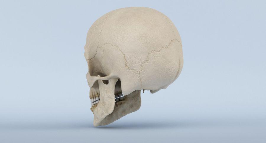 Anatomie du crâne royalty-free 3d model - Preview no. 10