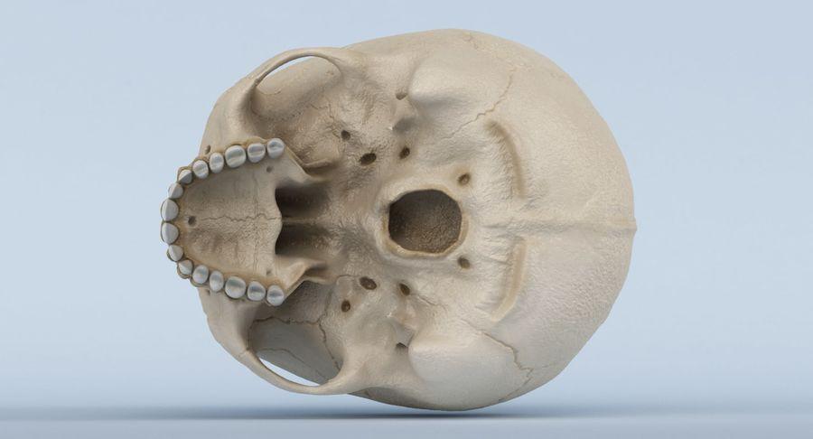 Anatomie du crâne royalty-free 3d model - Preview no. 14