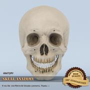 Anatomía del cráneo modelo 3d