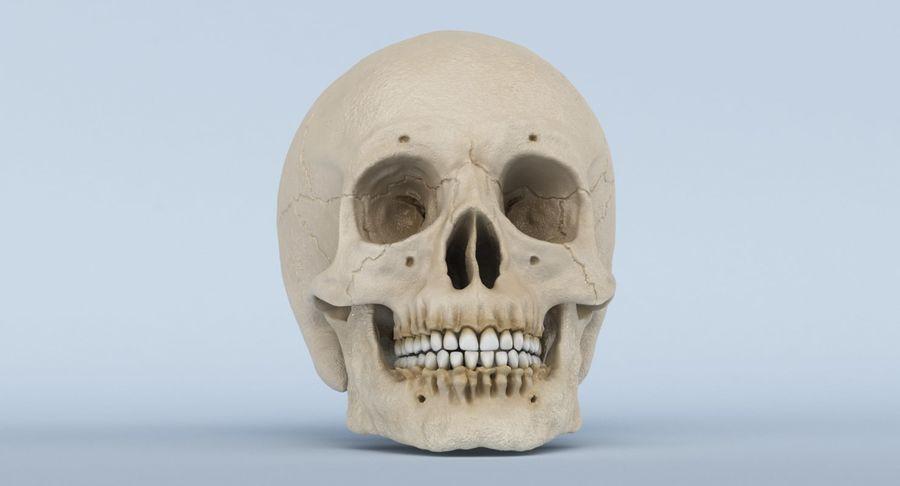 Anatomie du crâne royalty-free 3d model - Preview no. 25