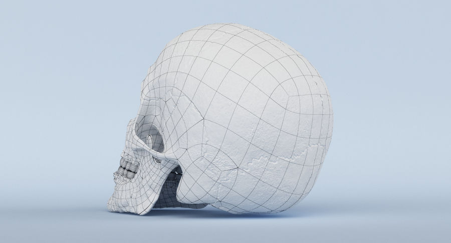Skull Anatomy royalty-free 3d model - Preview no. 30