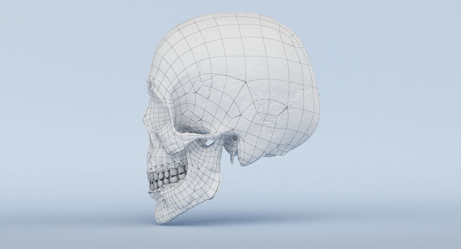 Skull Anatomy royalty-free 3d model - Preview no. 47