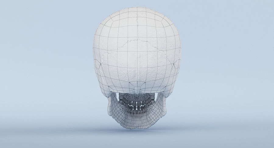 Skull Anatomy royalty-free 3d model - Preview no. 44