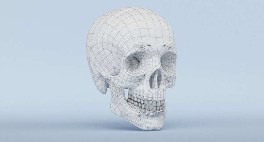 Anatomie du crâne royalty-free 3d model - Preview no. 39
