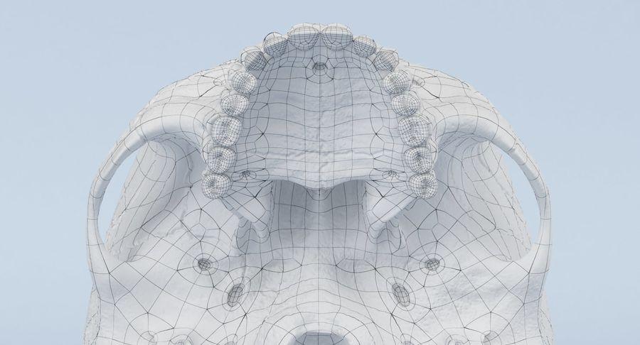 Anatomie du crâne royalty-free 3d model - Preview no. 34