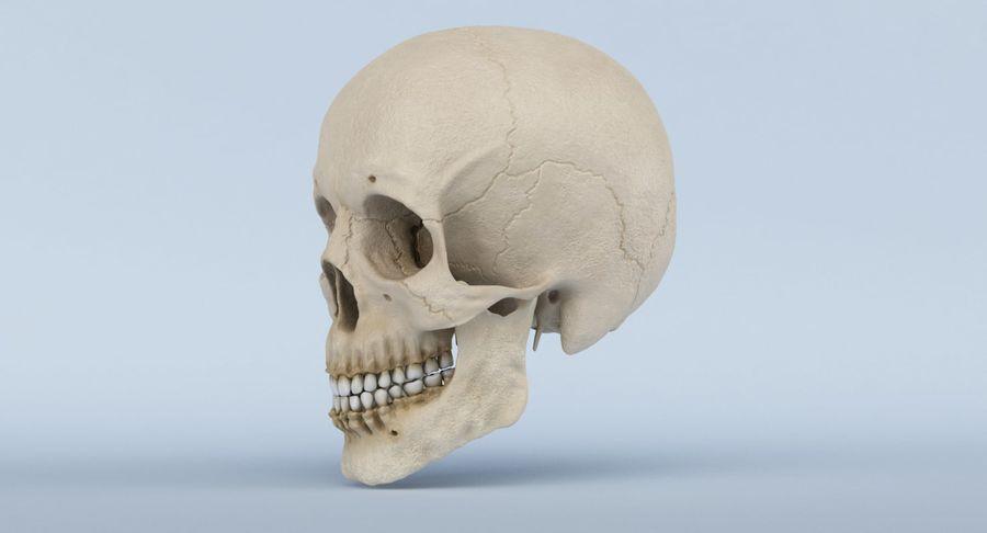 Anatomie du crâne royalty-free 3d model - Preview no. 12